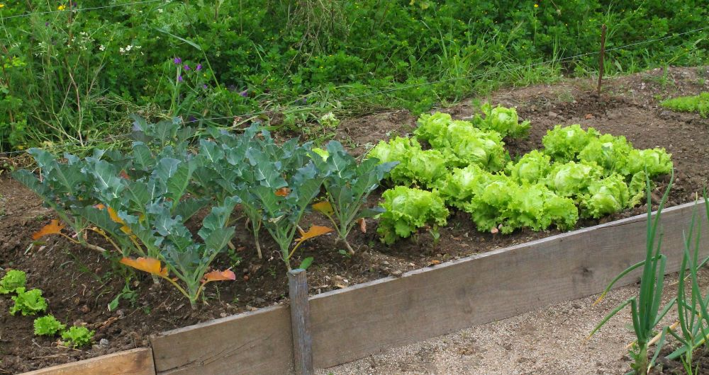 Международен уъркшоп представи бизнес модели за градско земеделие